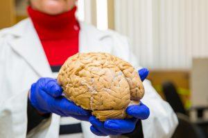 Woman holding Brain
