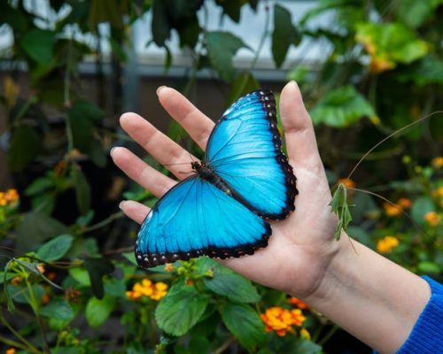 Adriana_Briscoe_Butterfly