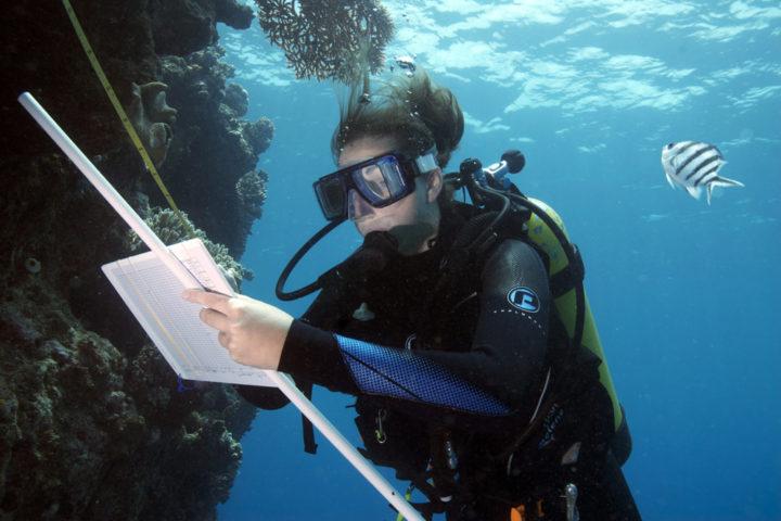 Dr Joleah Lamb surveying coral