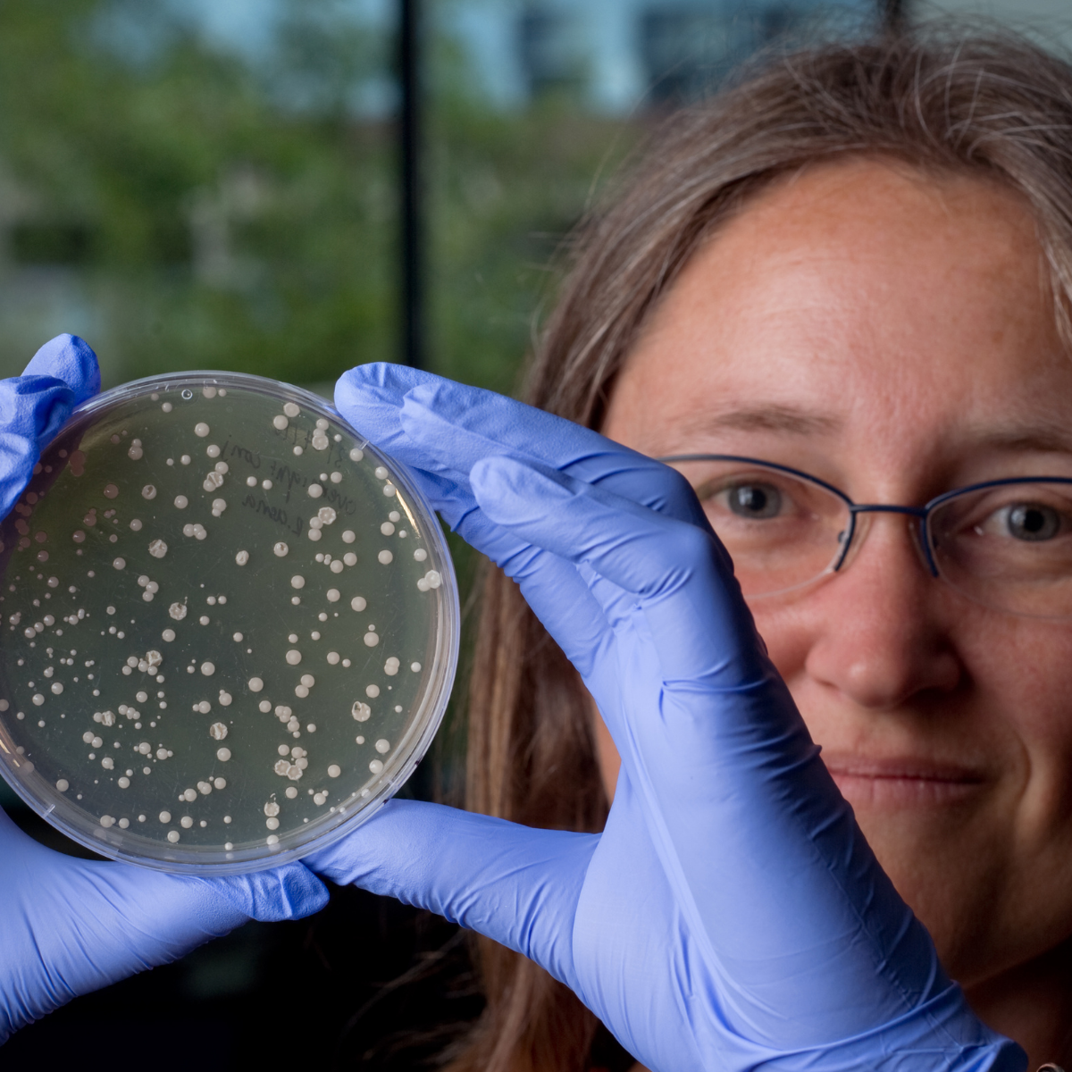 Katrina Whiteson, PhD. holding up a petri dish