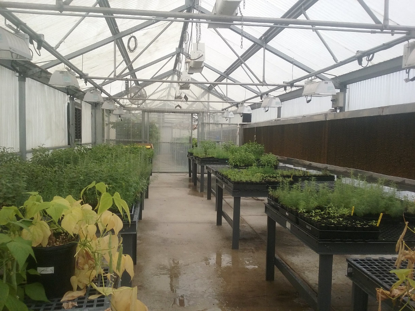 image of a green house for project 4